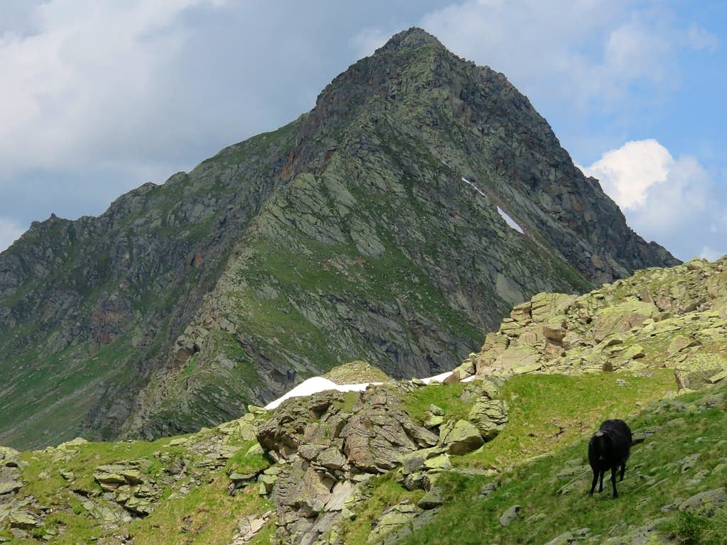 The black hiker