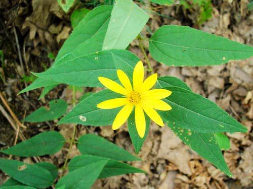 Wildflower on Saddle Mound