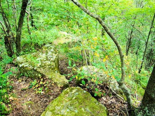 Saddle Mound Ridge Top