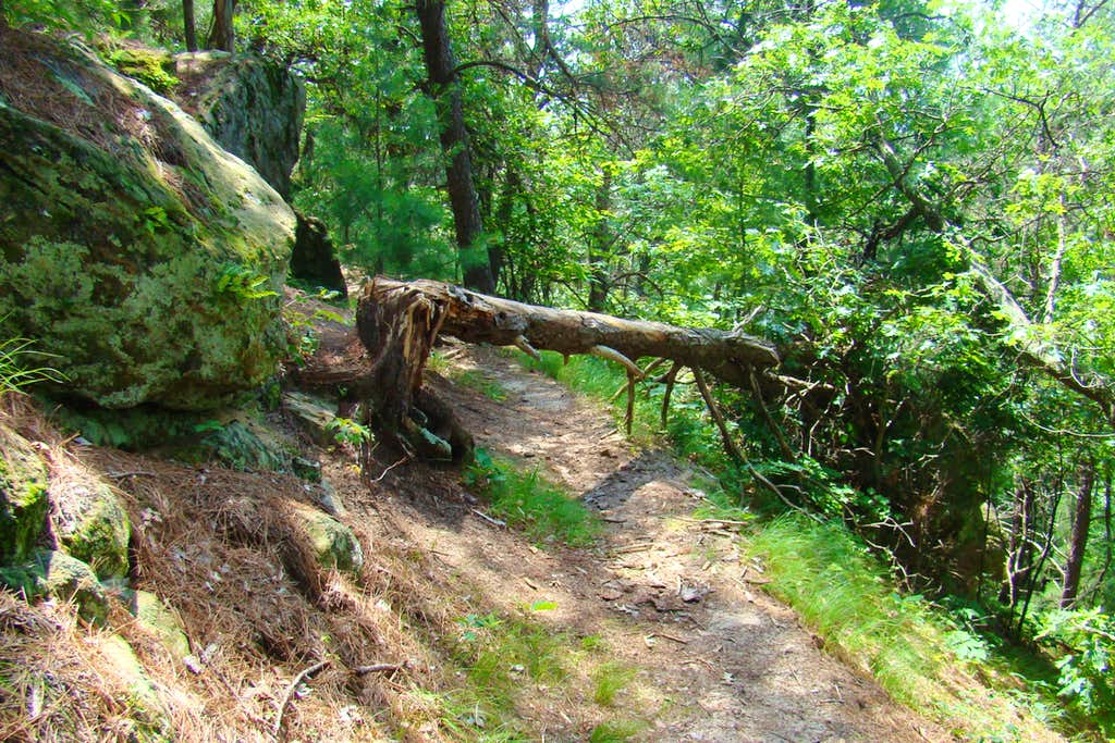 Minimal Trail Maintenance Here