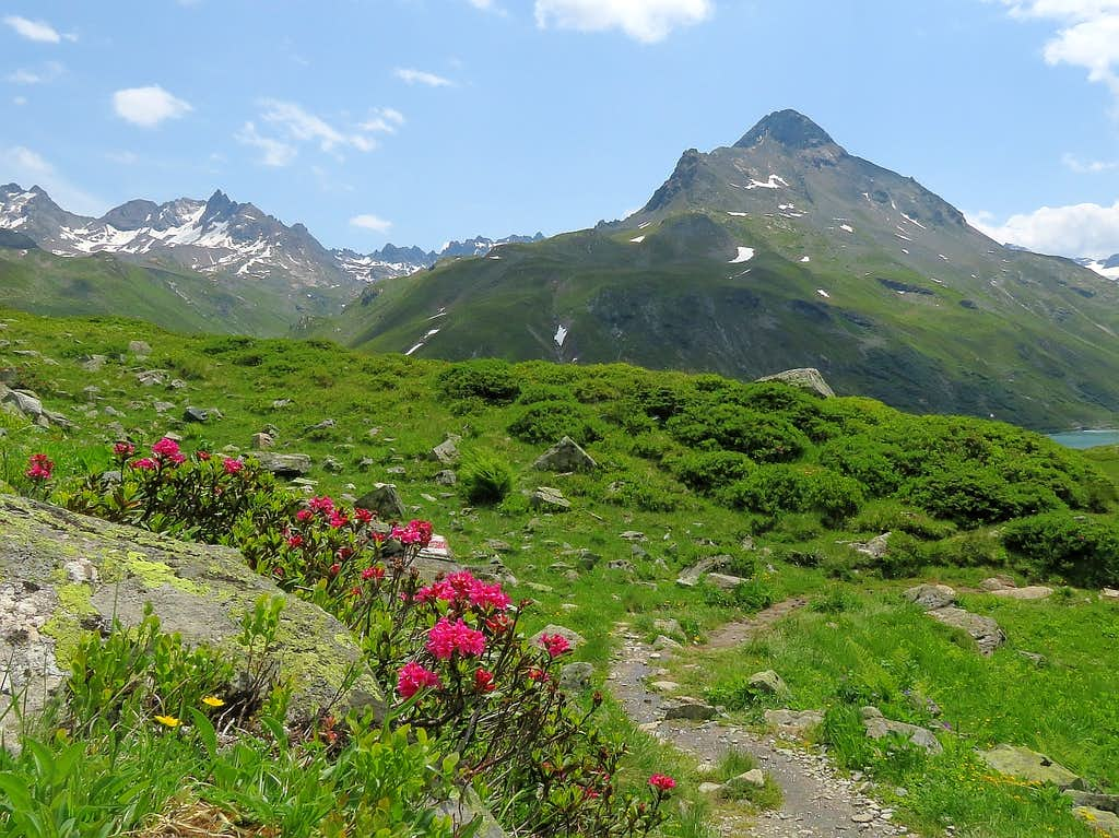 Hohes Rad and mountain roses
