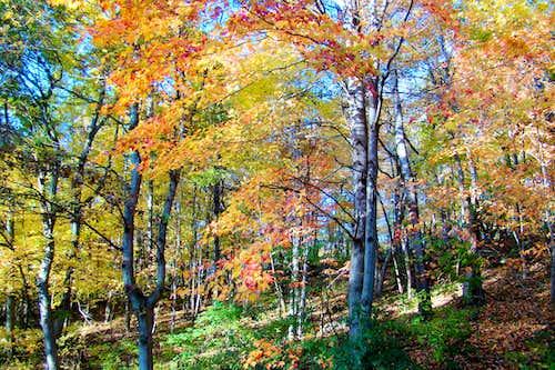 Elk Mound Forest