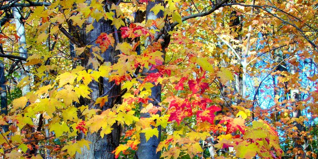 Elk Mound Fall Color