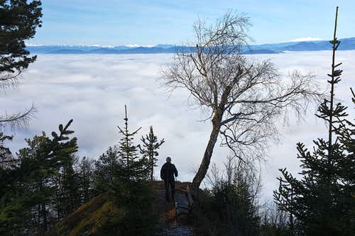 Rochusberg viewpoint