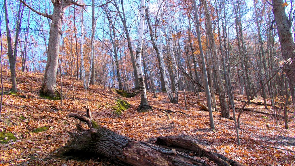 Late Autumn Bare Trees on Mt. Simon