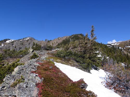 Upper southeast ridge of the Bull Creek Hills