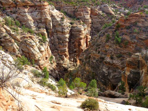 Virgin River at the bottom of Parunuweap Canyon