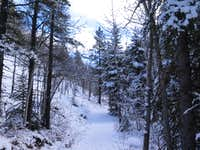 Snow along Prairie Creek trail