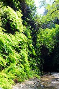 Fern Canyon (Prairie Creek Redwoods S.P.)