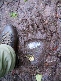 Not my footprint! (Glacier N.P.)