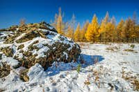 Golden Larch Trees in Autumn near Ulaanbaatar Mongolia-4