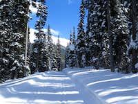Snowy fir forest