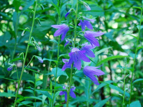 Perrot State Park Wildflowers