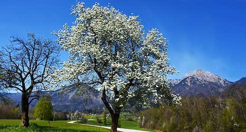 Spring below Storzic