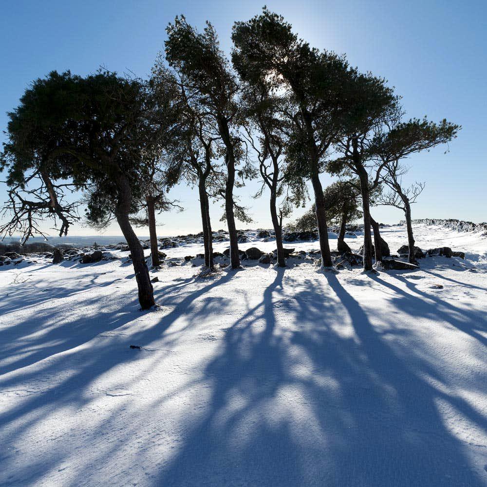 Dartmoor-Pines