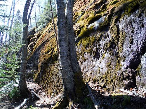 Trail from Britton Peak area to Carlton Peak - Lichen