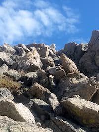Mountain goat on southwest slopes of Mt Massive