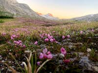 Scenic meadow during sunset in the Titcomb Basin of the Wind River Range