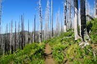 Pacific Crest Trail (1)