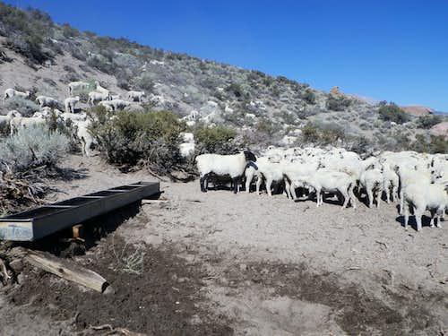 Be careful - the terrain is sheep!