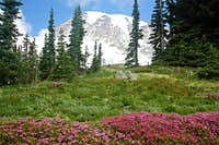 Mt. Rainier with heather