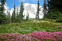 Mt. Rainier with heather