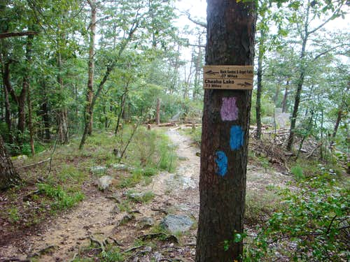 The Blue Blazed Trail Ends at the Pink Blazed Trail