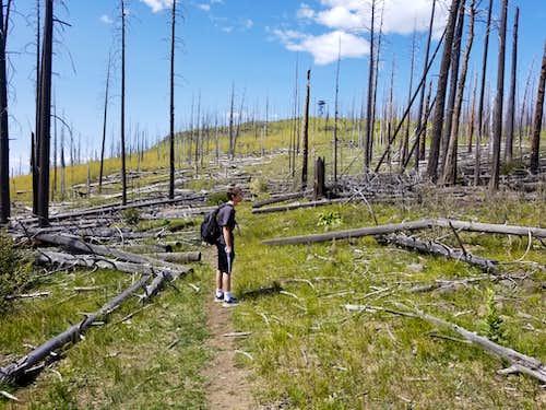 Burnt Forest near the summit of Escudilla Peak