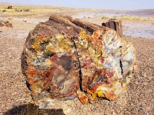 Petrified Log in Petrified Forest National Park