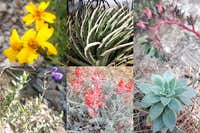 Endemic plants from the Oriental Basin