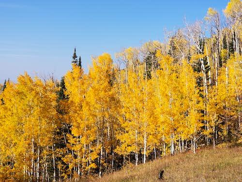 Autumn leaves on Grand Mesa