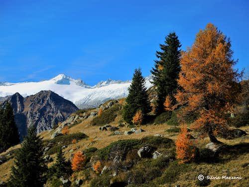 Autumn landscape near Malga di San Giuliano