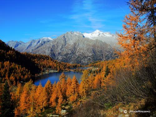Larches around Lago di Garzonè