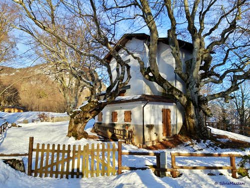 A two tree house, Marcarie
