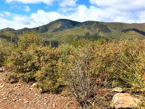 Cornucopia Ridge from Forest Road 201