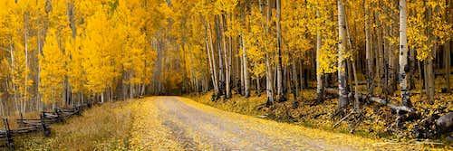 Aspen Trees of Colorado - Gintchin Fine Art Photography