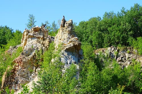 A Turkey Vulture Roost on Rib Mountain