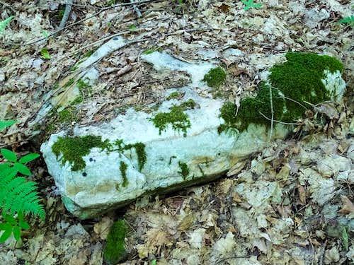 Common Quartzite on Rib Mountain