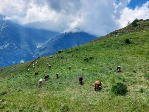 Pasture near Punta Tre Chiosis