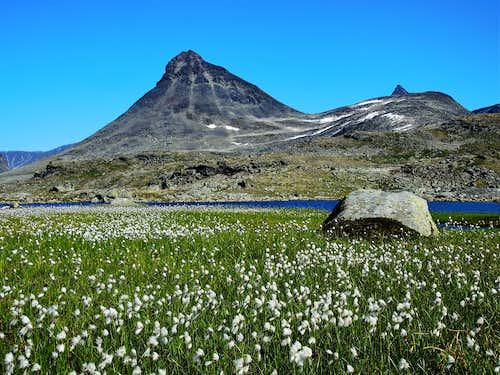 Blooming of Eriophorum Scheuchzeri and Kyrkja