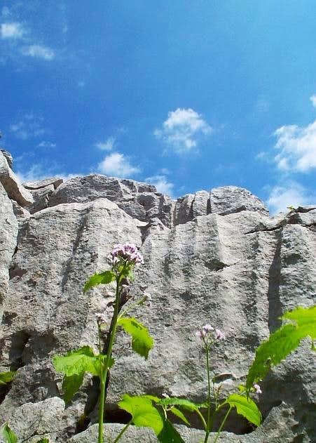 Javornica main ridge, taken...