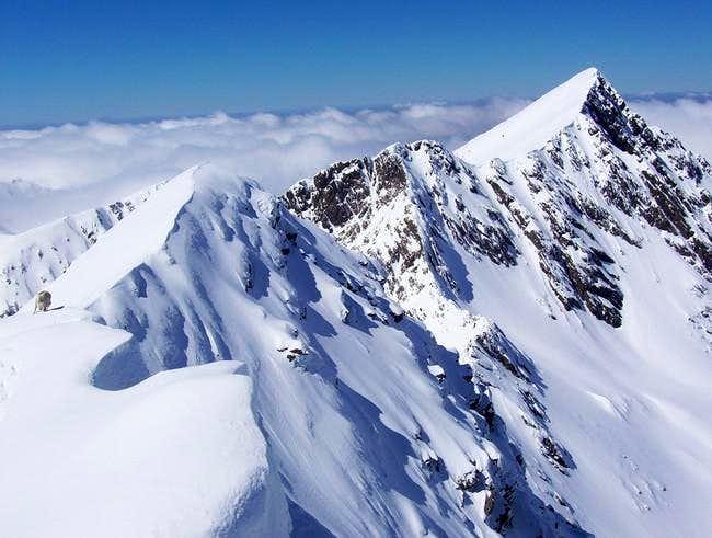 Negoiu peak (2535m) taken...