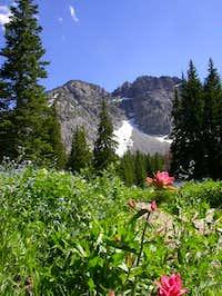 Beautiful wildflowers in...