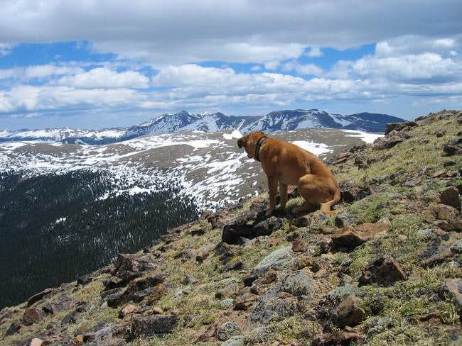 My dog Sopris on the Unnamed...