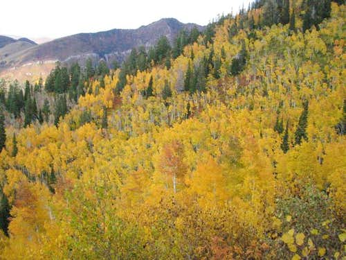 Fall colors on Gobbler\' Knob...