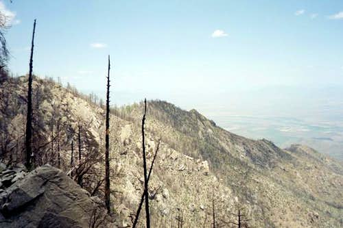 A view of a burned-out ridge...