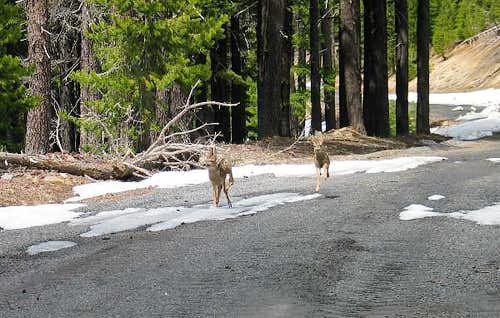 These two fawns are charging...