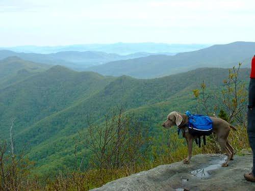 My dawg enjoying the summit.