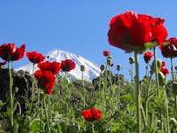 top of Damavand (5670 meters)...