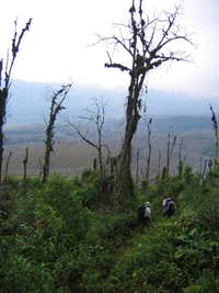 Trees killed by hot ashfall...